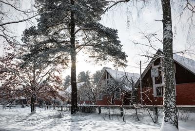 Еще один зимний день Зима коттеджи против света сосна дуб зимний снег