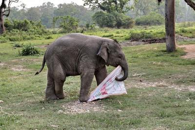 Пока никто не видит Непал слоненок