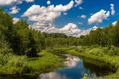 На реке Глушице лето глушица волга пейзаж