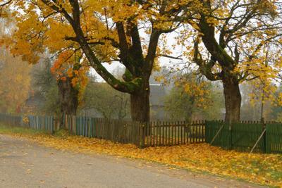 Осенний забор осень забор золото листьев
