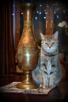 Вот я кошка... А чего добился ты? Кошка