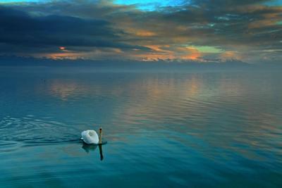 Лебединое озеро Охрид, Македония, Охридсо езеро