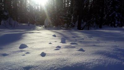 Блеск снега салаирского Сибирь Салаир снег солнце тайга чернь