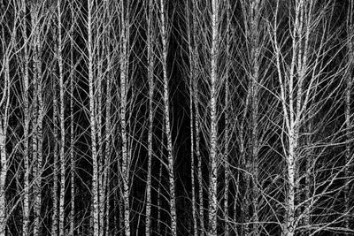 Березы Береза лес природа