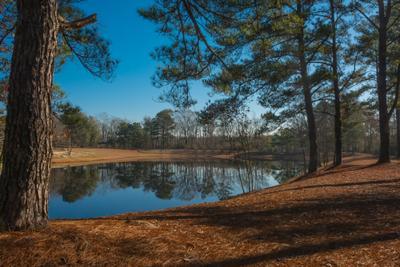 Сосны пейзаж природа сосны озеро