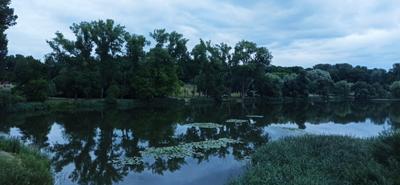Зеркало Вода отражение деревья озеро лето июль