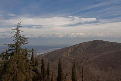 Сигнахи. Грузия Грузия Алазанская долина Горы небо дерево вино