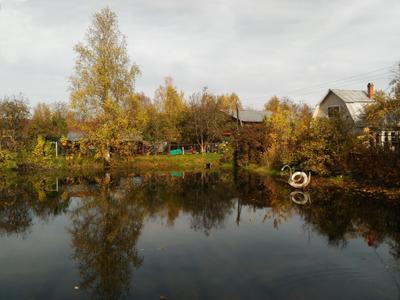 Осенний пруд с лебедем