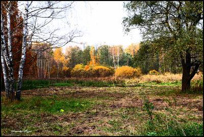 Опять про осень. Измайловский лес