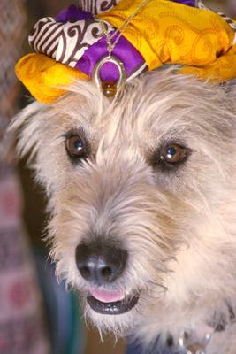 Thoughts собака из приюта волонтер любовь к миру