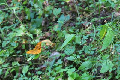 Butterfly makro nature forest butterfly