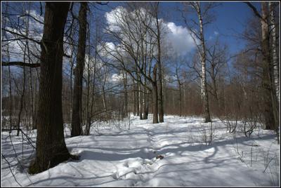 Весенний лес.