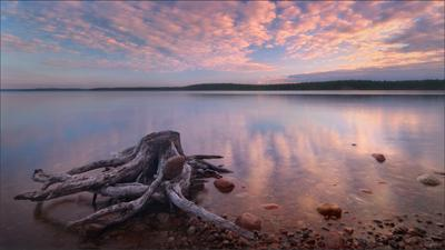 Рассвет на озере Куйто. Карелия лето озеро рассвет