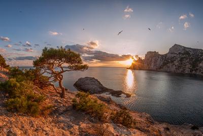 Закат у моря. Крым Новый Свет море Голубая бухта сосна чайки закат солнце