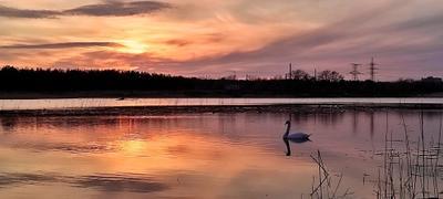 Лебединый закат...