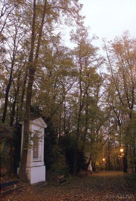 тени осенних аллей сумерки, прага, парк, аллея
