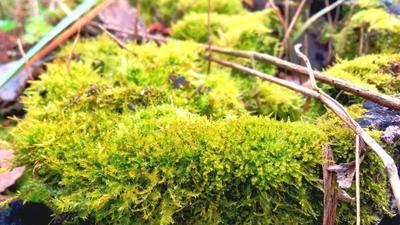 Сочная зелень мох лес солнце