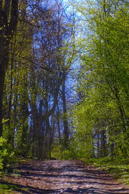 За шаг до Новолуния, 11 мая (1) весна май парк