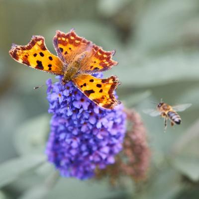 Запрос на посадку бабочка пчела