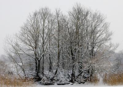 После первого снегопада Зима снег деревья