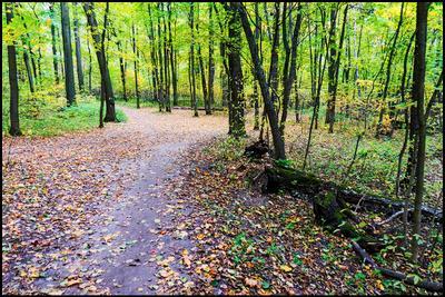 Когда -то была осень Измайловский лес