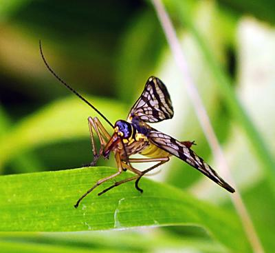 ***** макро насекомые