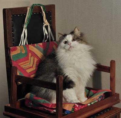Кот Морозова кот животные