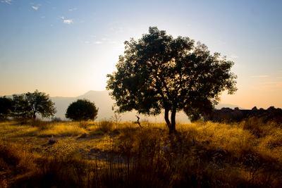 *** tree sunset