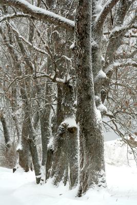 Вслед за мастером зимних пейзажей Копорье зима деревья голландия мастер зимних пейзажей