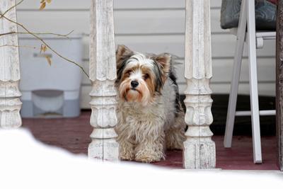 Ждем весну. бивер собака