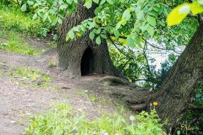 Чей-то дом дупло природа дерево