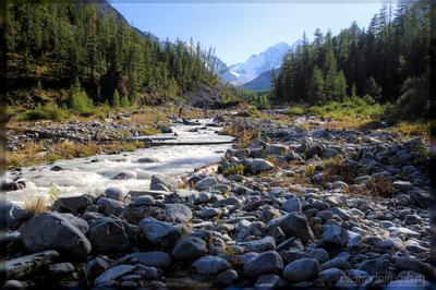 Дикая долина Менсу горы алтай река вода поход лето небо трава кедры менсу камни