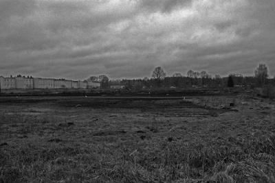 Поле поле небо черно-белое трава почва дома деревья кроны норы зима берёза облака пейзаж