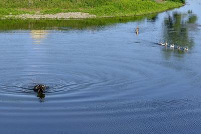 Переправа... Лето июнь пруд