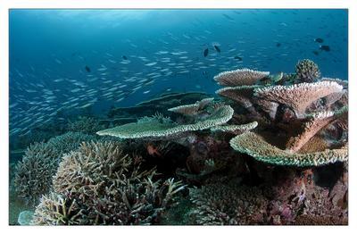 Reef scape reef,coral,color,deep,dive,maldives,blue,sea,underwater