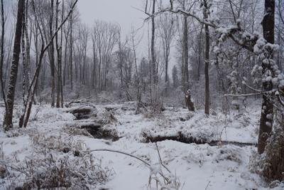 ЪЪ зима дерево ручей