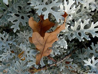 контраст осень, листья