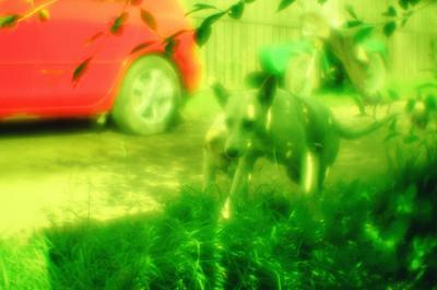 монособаки монокль собаки колесо зелёное