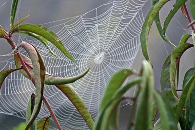 на пороге осень паутина осень утро