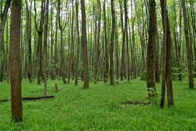 Зелень лето лес трава