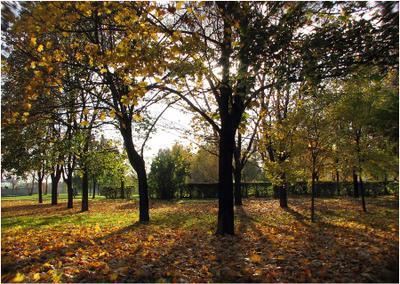Все еще золотая осень, листья, солнце