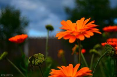 Сумерки сумерки цветы