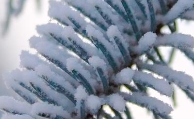 *** ёль мороз иней снег зима