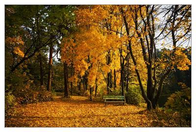 Скамеечка для Осени Скамеечка осень