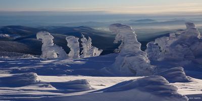 Снеговики горы, горная шория, зима, мустаг, солнце, снег, шерегеш