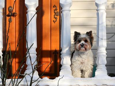 На страже. Бивер зима природа собаки