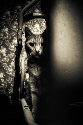 Незаметная фотомодель 80x кот фотомодель модель коты животное животные