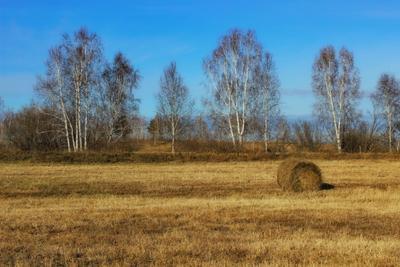 В полях поле сенокос картагон река биликтуй китой ангарск