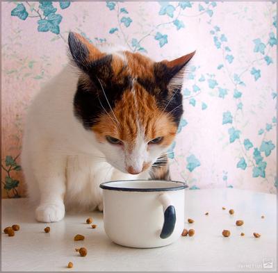 Это что, еда? кошка корм еда