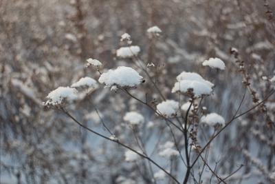 Пришла зима Мир-1